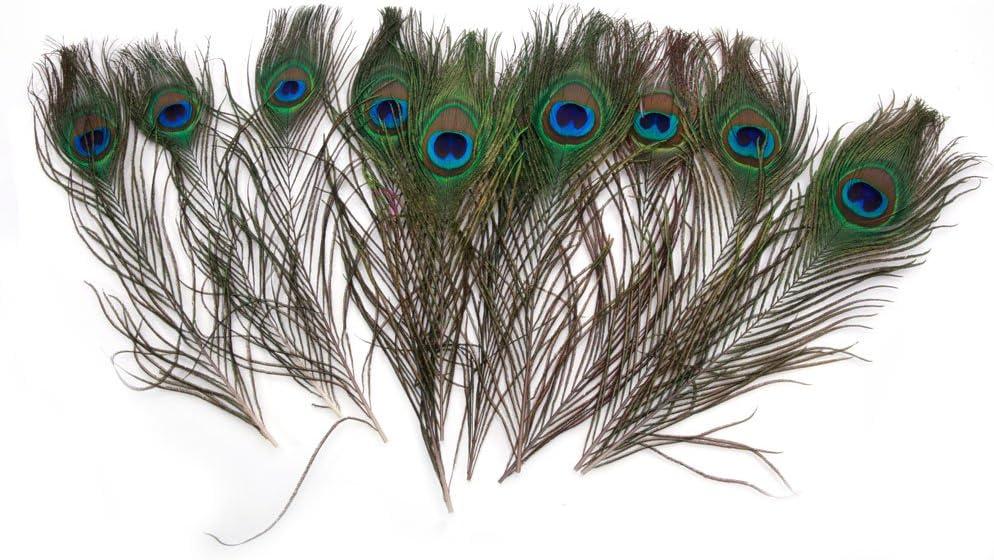 "Craft//Halloween//Bridal//Halloween 75 Pcs PEACOCK SWORDS Natural Feathers10-12/"""