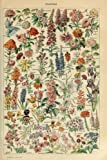 Assorted Flowers - E - Vintage Bookplate - Adolphe Millot Artwork (12x18 Art Print, Wall Decor Travel Poster)