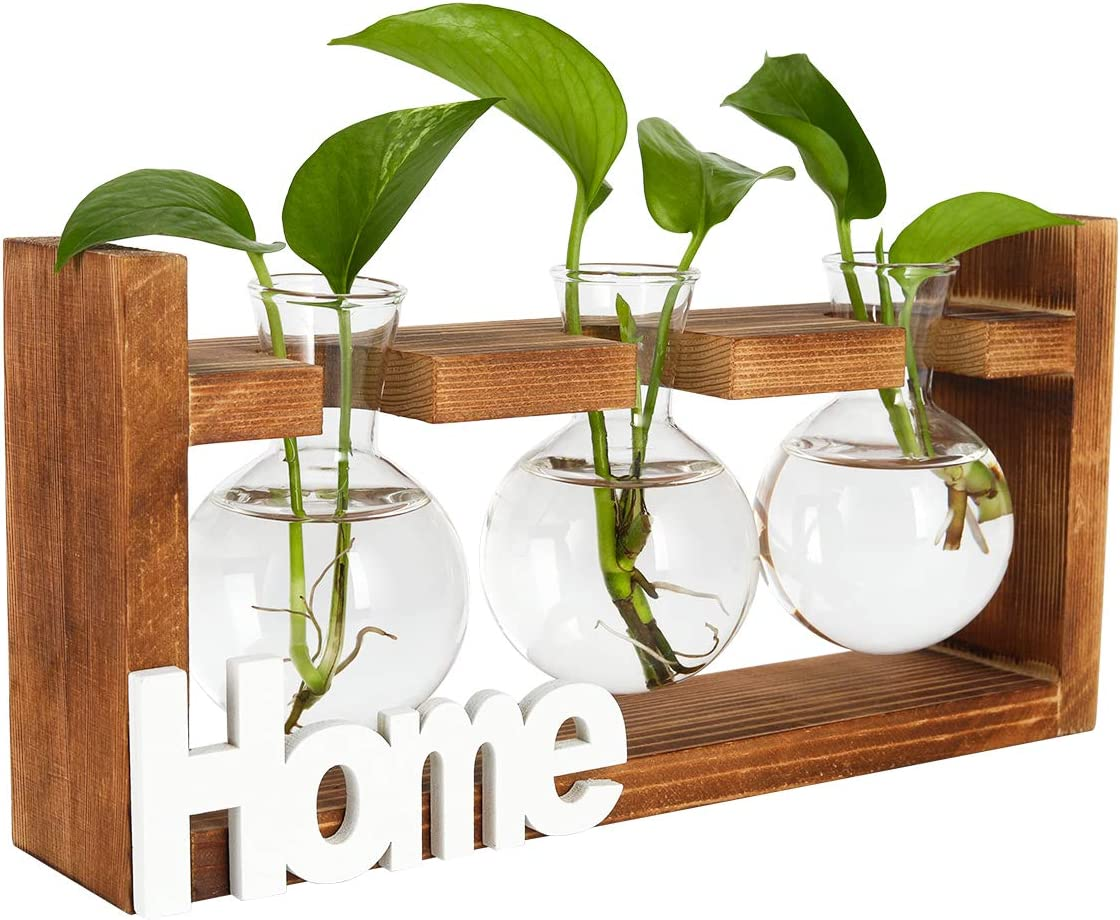 PAG Plant Terrariums Kit Tabletop Hydroponics Air Planter Holder with 3 Bulb Glass Vase and Solid Wood Stand for Home Office Decoration