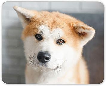 Shiba Inu Akita Hund Mauspad Pad Japanische Welpen Amazon De Elektronik