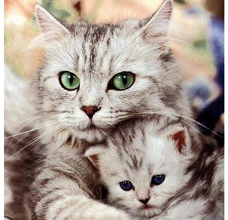 Rompecabezas Adulto Gato Madre Y Gatito.Foto De Cartel ...