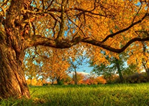 Leowefowa Autumn Tree Backdrop 10x8ft Vinyl Huge Old Trunk Long Branches Yellow Leaves Photography Background Child Adult Picnic Camping Photo Shoot Autumn Nature Scenery Indoor Decors Wallpaper
