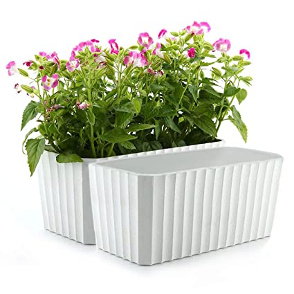T4U Plastic Rectangular Self Watering Window Box with Water Level Indicator on house vines, house stars, house home, house slugs, house chemicals, house gifts, house design, house ferns, house flowers, house crafts, house decorations, house nature, house plans, house fire, house people, house rodents, house candy, house mites, house cars, house family,