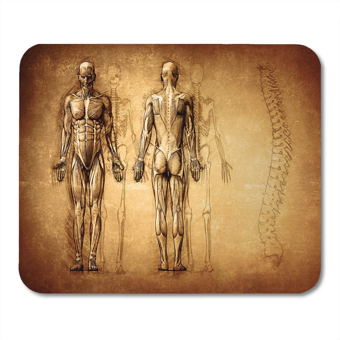 Superb Amazon Com Emvency Mouse Pads Muscle Human Anatomy Drawing Old Wiring Cloud Hisonuggs Outletorg