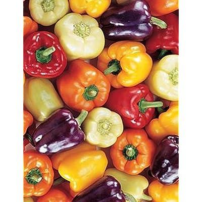 Determina New Garden Vegetable Plants Blooms Colored Pepper Seeds Vegetables: Clothing