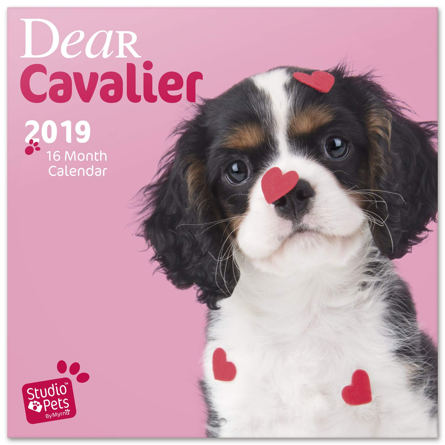 Amazon.com : Grupo Erik 2019 Studio Pets Cavalier King ...