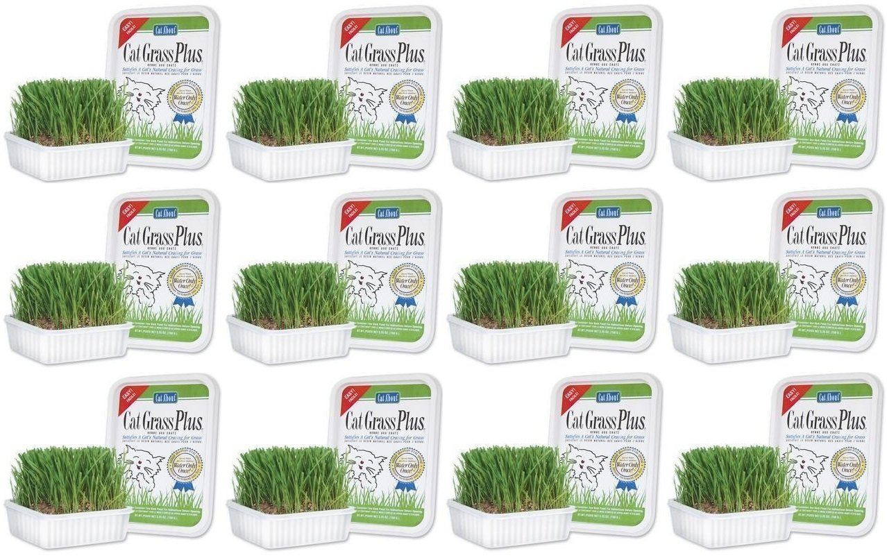 Cat-About Multi-Cat CatGrass Plus Tub 150 grams (Pack of 12)