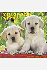 Just Yellow Lab Puppies 2020 Wall Calendar (Dog Breed Calendar) Calendar