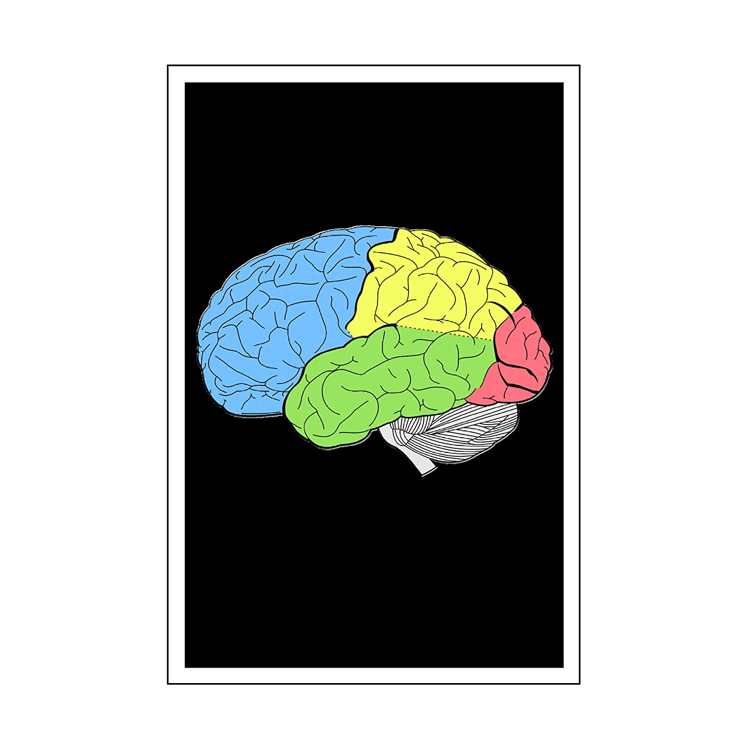 Spitzy's Lobes of Human Brain Anatomy Science Teacher Poster (12' x 18' Includes White .5' White Border) Spitzy' s