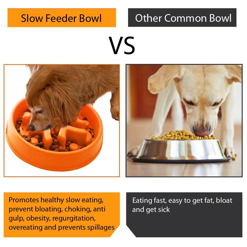 best skid sankill pet amazon non bowl co puzzle fun stop dog feeder food uk slow bloat cat dp supplies