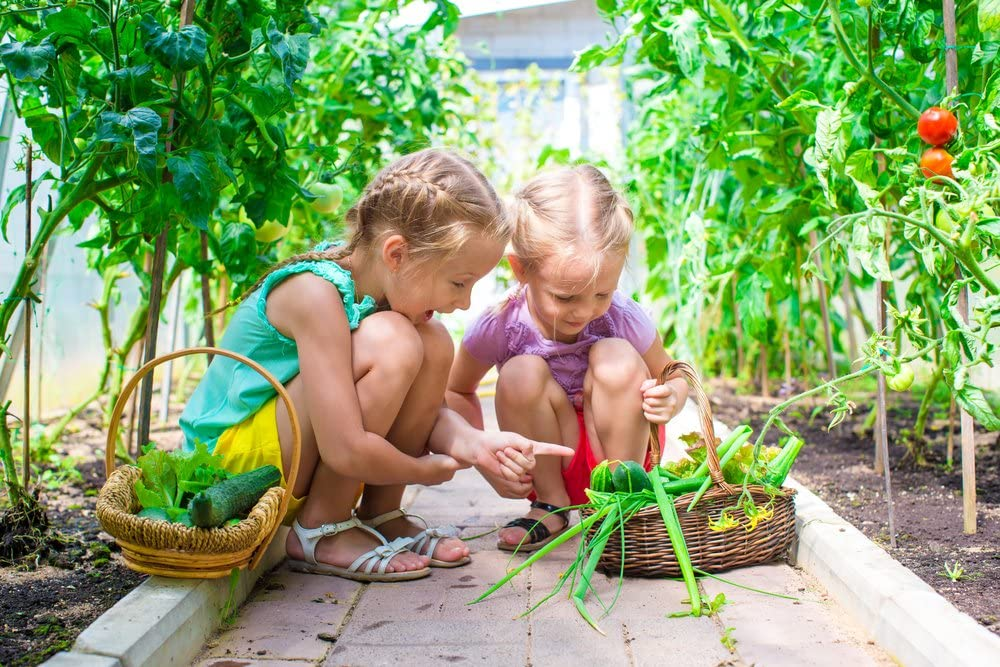 Weird and Rare Varieties Perfect for Kids and School Gardens Heirloom Vegetable Seeds 13 Varieties of Organic Non-GMO Open Pollinated Garden Seed for Planting