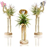 Melphoe Puppy's Mom 3 Pack Air Plant Holder Wooden Jointed Mannequin Tabletop Flexible Shape Adjustable Pose & DIY Accessorie