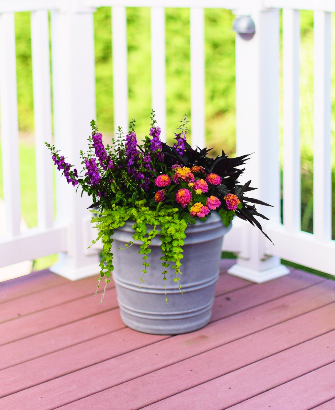 Burpee Combo 'Paradise' - Create Instant Colorful Container Gardens with Eight 4 in. pots by Burpee (Image #2)