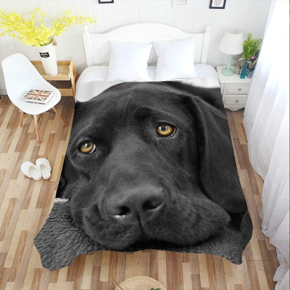 Amazon.com: Moslion Soft Cozy Throw Blanket Black Lab ...