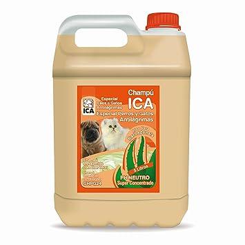 ICA CHPG24 Champú Anti Lágrimas con Aloe Vera para Perros y Gatos: Amazon.es: Productos para mascotas