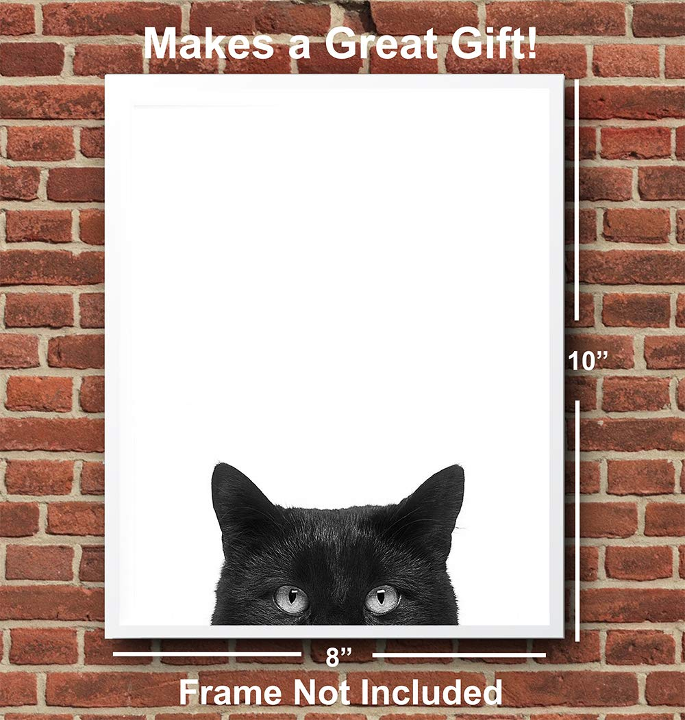 956407c4f0b3c Black Cat - Unframed Wall Art Print - Great Home Decor or Gift For Animal  Lovers - Ready to Frame (8X10) Photo