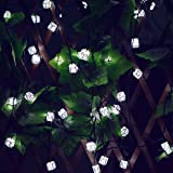 Amazon Price History for:Solar String Lights, 20ft 30 LED Waterproof Letters Fairy Lights for Kids Bedroom Decoration Lights for Outdoor Indoor Holiday Patio Landscape Home Birthday Present Xmas Tree(White)