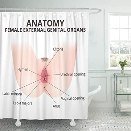 Amazon TOMPOP Shower Curtain Hymen The Structure Of Female