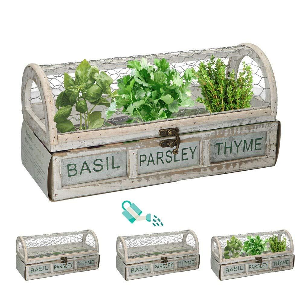 Caja de semillas 30x12,5x15cm con perejil, albahaca y tomillo ...