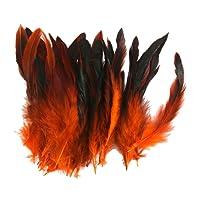 Environ 50à coudre Craft Coq Plumes 12–18cm
