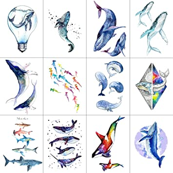 "SHARK DECAL  WINDOW STICKER CHOOSE FROM 15 SPECIES CHOICES 12/"" SHARK DECALS"