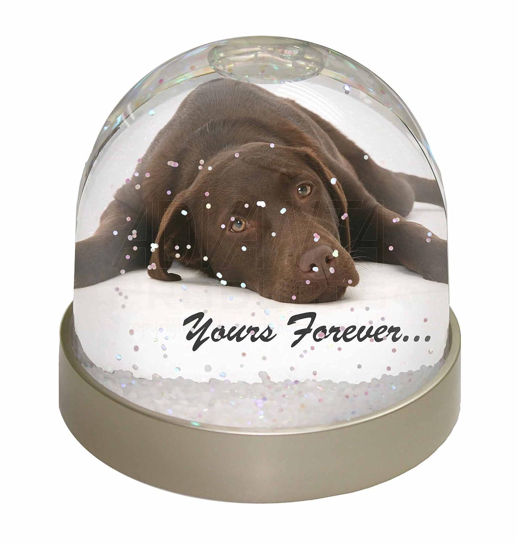 Advanta Chocolate Labrador Dog Love Snow Dome Globe Waterball Gift, Multi-Colour, 9.2 x 9.2 x 8 cm Advanta Products AD-L59GL