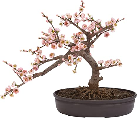 Buy Nearly Natural Artificial Cherry Blossom Bonsai Tree With Pot Pink 1 Piece Online At Low Prices In India Amazon In
