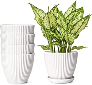 Dahey 6 Inch Plastic Planters with Saucers Indoor Flower Plant Pots, Set of 5 Gardening Containers with Drainage Trays for Flowers, Herbs, Cactus,Succulents, Modern House and Office Décor, White