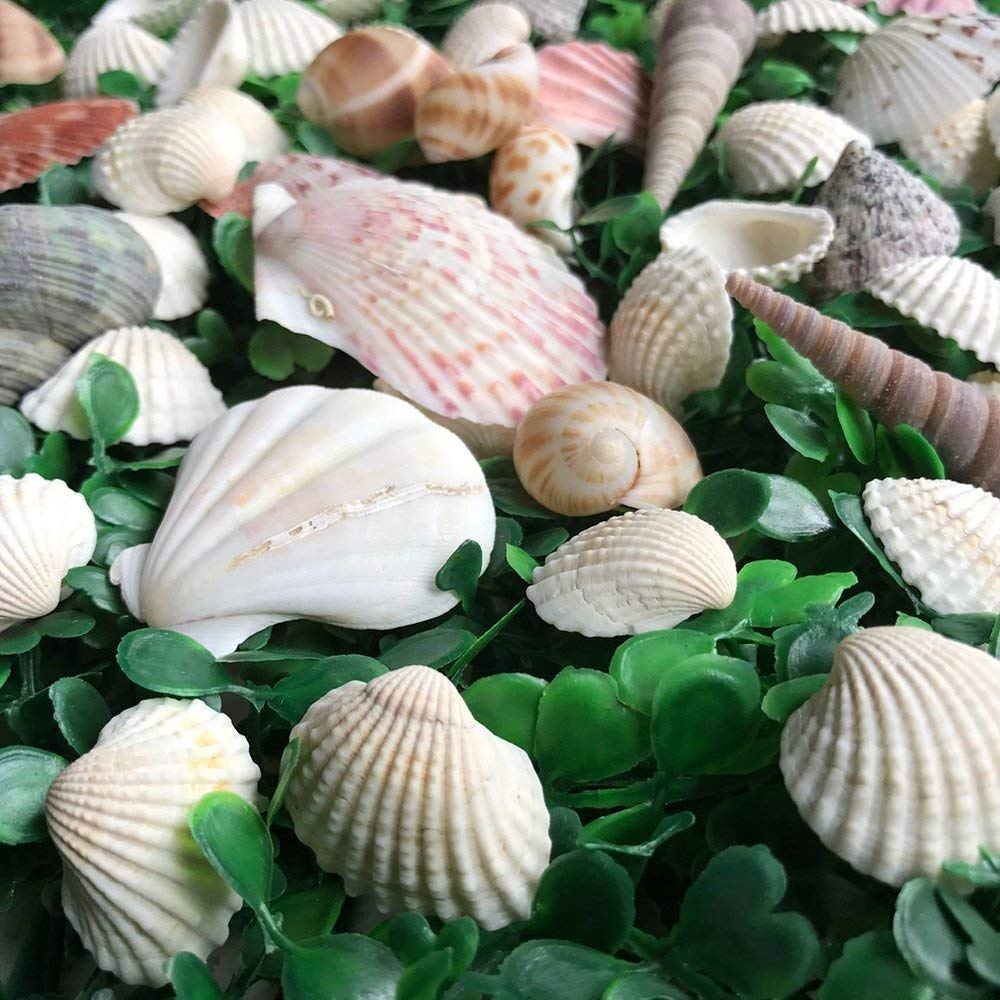 LoveInUSA Sea Shell Assortment, Sea Shells with Jar Mixed Natural Beach Decorative Seashells for DIY Home Gifts Crafting 50~70 PCS Valentine\'s Day Gifts