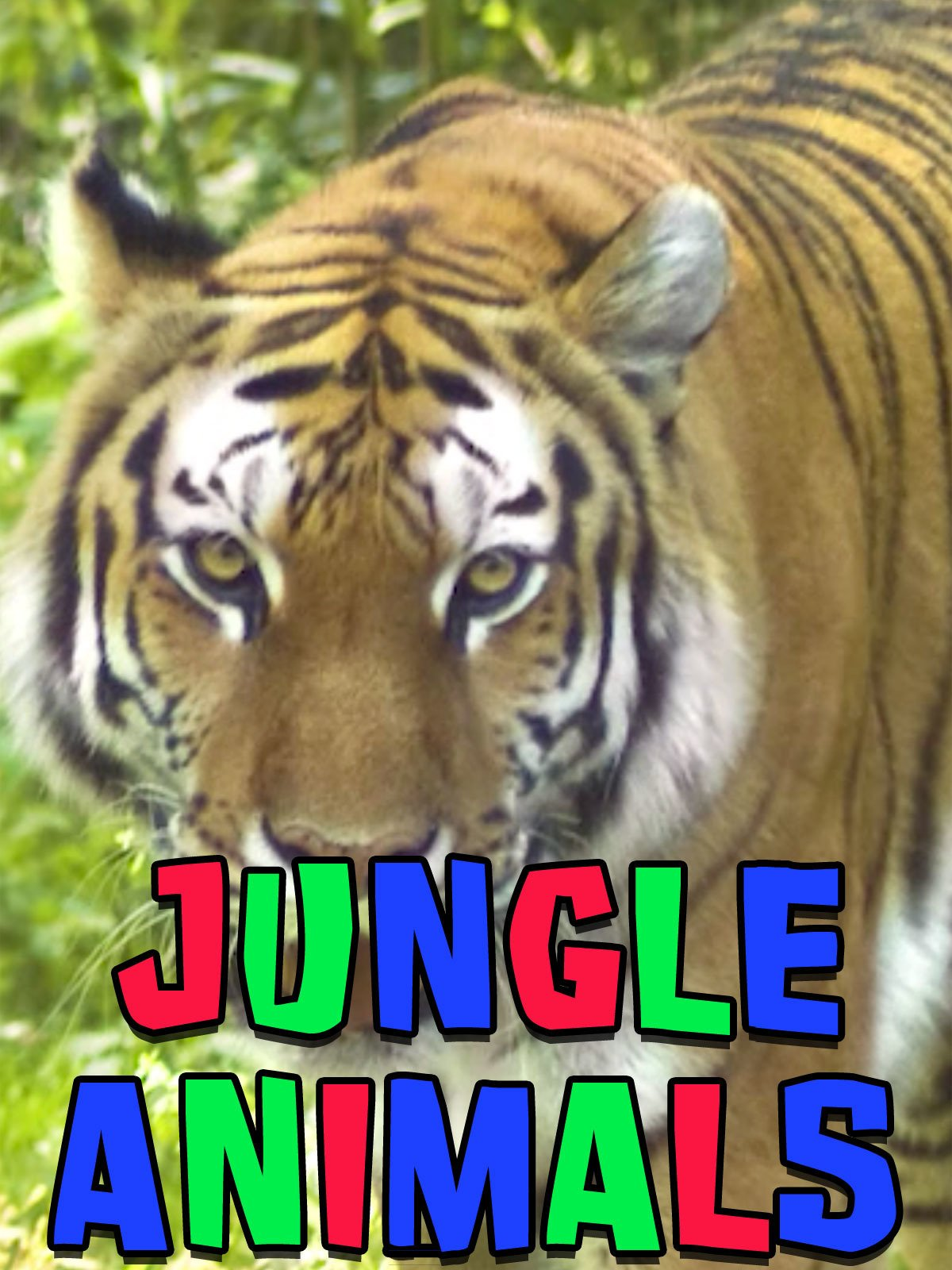 Jungle Animals on Amazon Prime Video UK