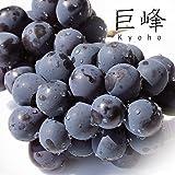 【 九州産 】種無し 巨峰 葡萄 ぶどう (4パック(種無し))