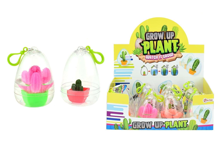 Toi-Toys Magique Oeuf Eclosion Cactus Multicolore