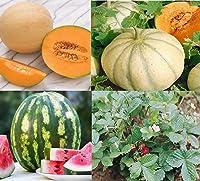 David's Garden Seeds Collection Set Fruit 9907 (Multi) 4 Varieties 350 Non-GMO Seeds