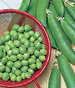 Pea Seed, Thomas Laxton, Heirloom, Non GMO, 20 Seeds, Perfect Peas, Country Creek Acres