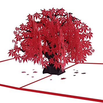 Amazon Eraimp Japanese Maple Pop Up Card 3D Greeting Tree Nature Foliage Christmas Cards Birthday Office Products