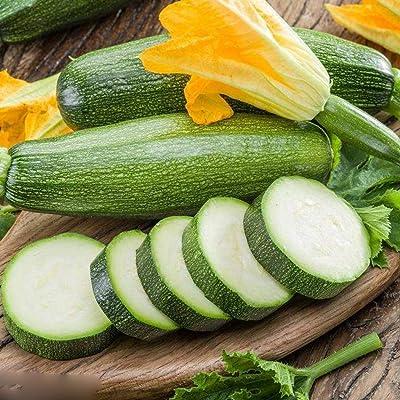 Seeds for Planting 10Pcs Squash Seeds Bonsai Vegetable Fruit Indoor Garden Plants : Garden & Outdoor