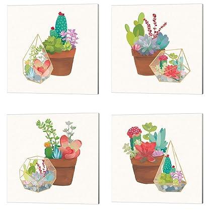 833d3cfa469 Amazon.com  Succulent Garden by Wild Apple Portfolio