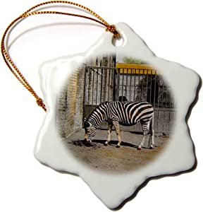 3dRose Vintage Early 1900s Zebra in The Zoo Victorian Era Photo Wildlife - Ornaments (ORN_301302_1)