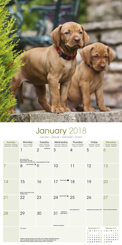 Vizsla calendar dog breed calendars 2017 2018 wall calendars vizsla calendar dog breed calendars 2017 2018 wall calendars 16 month by avonside megacalendars 9781785801051 amazon books nvjuhfo Images