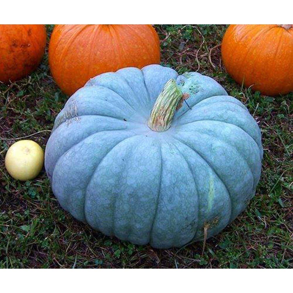 5Pcs Blue Pumpkin Seeds, Organic Healthy Vegetable Seeds Garden Planting Hinmay