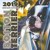 Boston Terrier 2019 Mini Wall Calendar