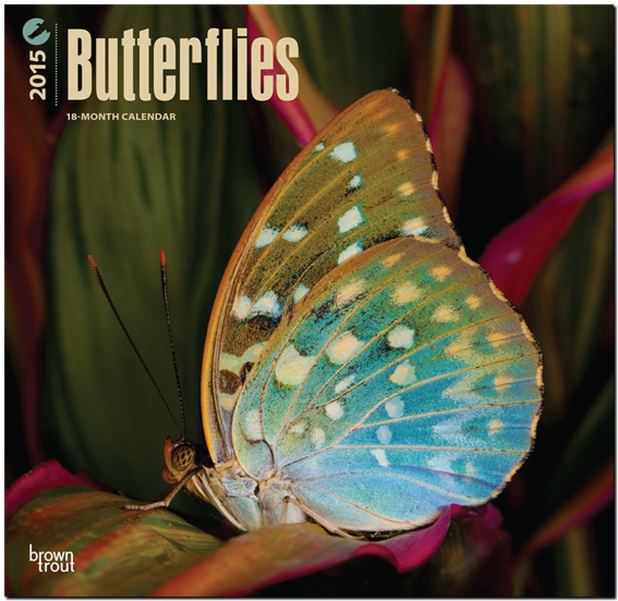 Download Butterflies 2015 Square 12x12 (Multilingual Edition) pdf epub
