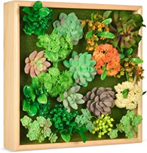 HomeLifairy Artificial Succulent Plants Wall Decor Art for Home Decor Indoor with Pine Frame Hanging Living Room Kitchen Wall Decor,12x12 inch