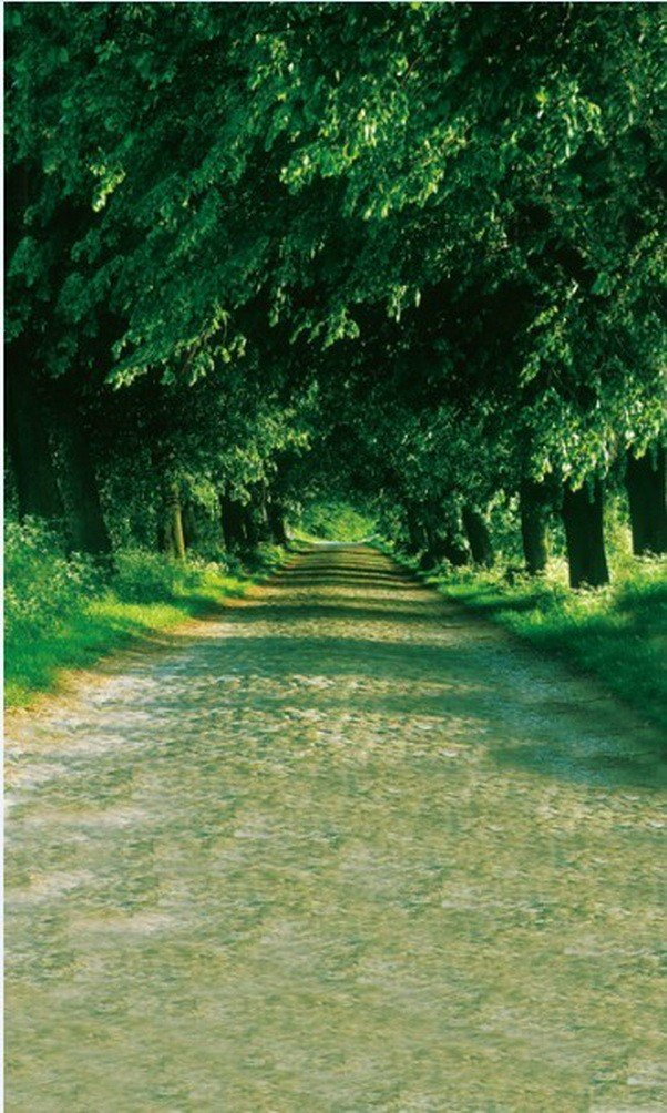 A Monamour Green Trees Along The LongパスRoad Portrait写真背景5 x 7ft風景ビニール壁画スタジオ写真の背景幕   B01J86JLWO