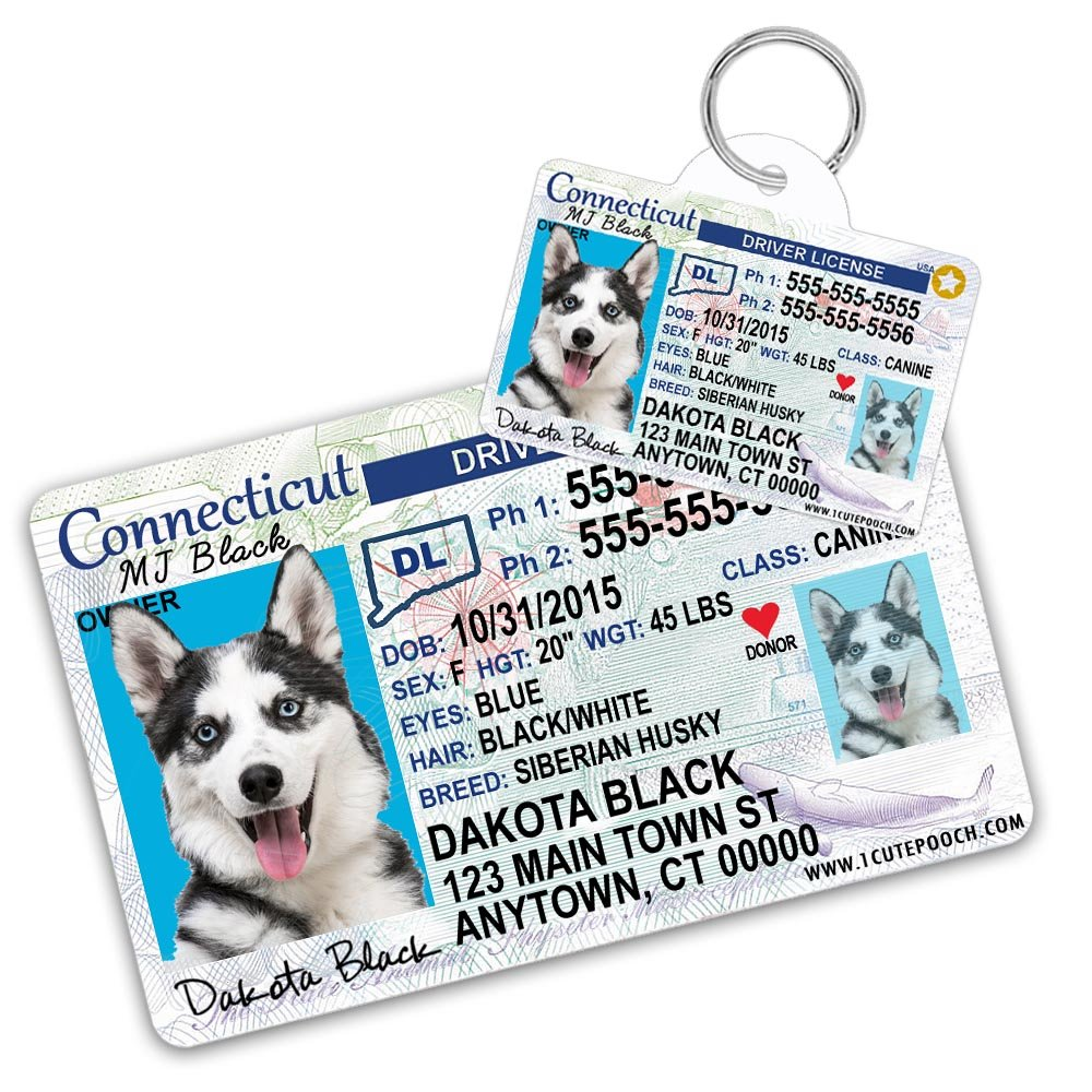 Connecticut Driver License Custom Dog Tag for Pets and Wallet Card - Personalized Pet ID Tags - Dog Tags For Dogs - Dog ID Tag - Personalized Dog ID Tags - Cat ID Tags - Pet ID Tags For Cats by 1 Cute Pooch