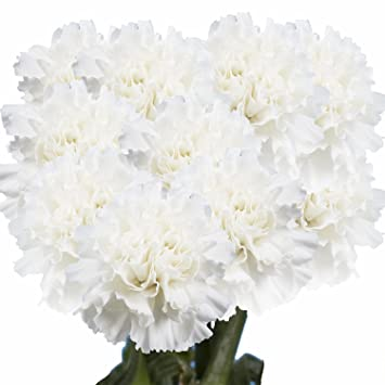 Amazon GlobalRose 100 Fresh Cut White Carnations