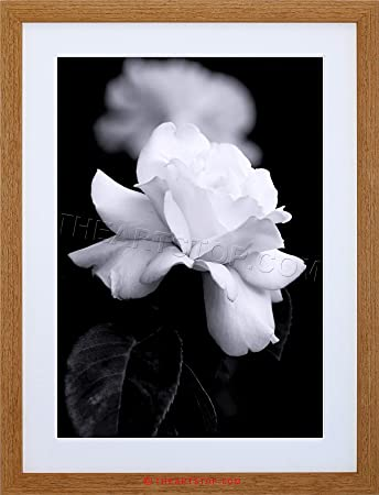 Amazon photo nature black white rose petal flower framed print photo nature black white rose petal flower framed print f12x4204 mightylinksfo