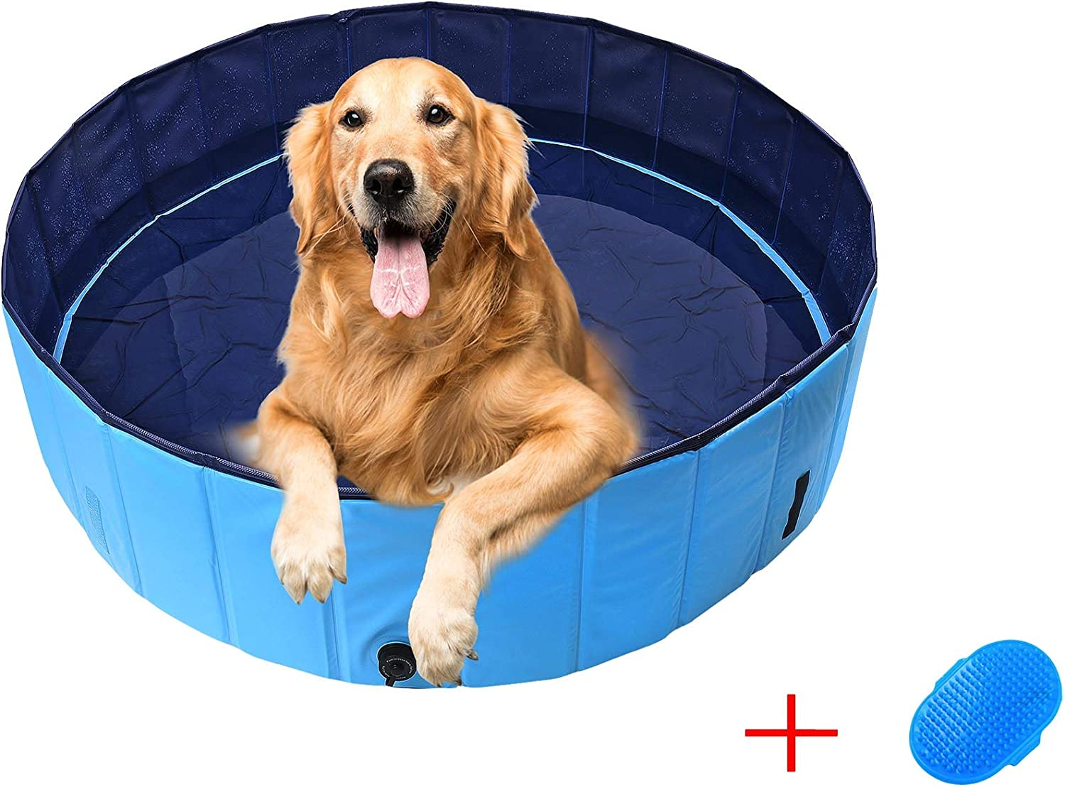piscina para perros de color azul con golden retriever dentro