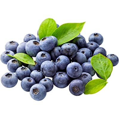 Highbush Blueberry 100 Seeds - Vaccinium Corymbosum Seeds, Blueberry Seeds Organic Non GMO, Edible Fruit Heirloom Blueberry Plant Seeds, Hardy Blueberry Bushes Live Plant Seeds : Garden & Outdoor