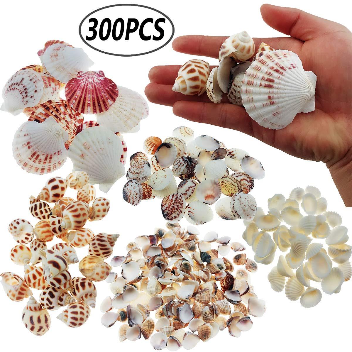 Wankko 300pcs Sea Shells Mixed Ocean Beach Seashells, Various Sizes Natural Seashells for Fish Tank, Home Decorations, Beach Theme Party, Candle Making, Wedding Decor, DIY Crafts, Fish Tan
